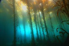 10 ονειρικές- υποβρύχιες φωτογραφίες  - ΜΕΓΑΛΕΣ ΕΙΚΟΝΕΣ - LiFO