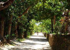 竹富島とは、沖縄県の八重山諸島にある島である。石垣島から、高速船で10分ほどのところに位置し、「つるかめ助産院〜南の島から〜」のロケ地として使用されたことでも有名である。沖縄の雰囲気に溢れている竹富島には、魅力がたっぷり!