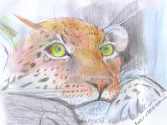 leopardo en lapices de colores