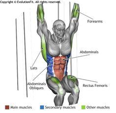 ABDOMINALS -  HANGING LEG RAISE