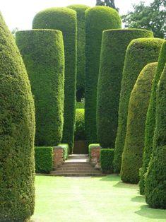Organic columns - 18th century yews, Packwood House, Warwickshire