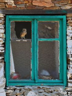 Owl in abandoned window