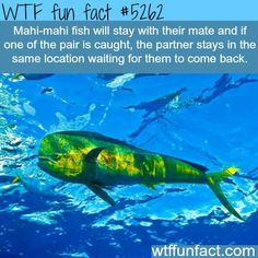 Whale fall wtf fun facts weird interesting for Fun fish facts