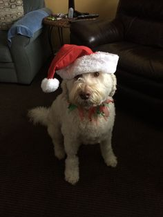 "Gryffin's people sent us the happiest holiday message today: ""Thank you for saving our dog's life this October. He is in good health and full of life, he just had his eleventh birthday this month. We all wish you all a very Merry Christmas and a Joyful New Year."""