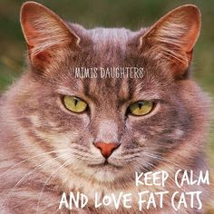 Who loves a fat cat? We sure do ☺️ #mimisdaughters