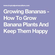 Learn how to grow bananas. Growing bananas does not take much effort, but it does require that you get a few things right when you first get started. Fruit Garden, Tropical Garden, Banana Seeds, How To Grow Bananas, Mexican Garden, Banana Plants, Home Grown Vegetables, Potted Trees, Edible Plants