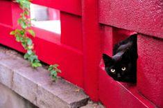 黒猫                                                                                                                                                                                 もっと見る