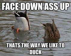 Hey baby Wanna Duck Meme | Slapcaption.com