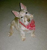 Alabama Animal Rescue