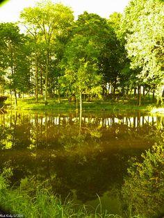 A golden pond  *~<3*Jo*<3~*