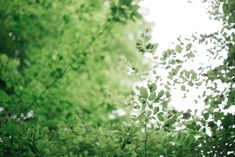 Workshop, Licht, Dezember, Wald, Waldbaden, Wintersonnenwende, Feuer, Lagerfeuer, Sein, Genuss, Workshop, Licht begrüssen, Helligkeit Workshop, Herbs, Plants, Winter Solstice, Bonfires, December, Forests, Nature, Atelier