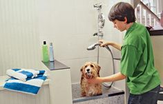 A dedicated washing area for your most dedicated friend makes bath time a breeze