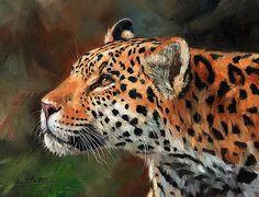 Jaguar by David Stribbling