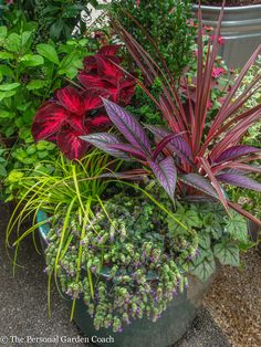 Mostly #foliage, but tons of personality, #color and texture!!