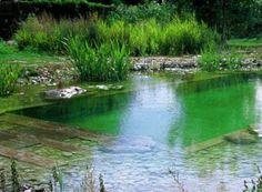 pond/pool