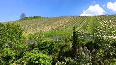 """Wir wünschen allen Weinkorb-Fans ein sonniges Wochenende. Übrigens werden morgen die """"Köpfe am Korber Kopf"""" eröffnet dort könnt ihr gerne an unserem Weinstand vorbeischauen! :)"""