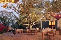 spicers hunter valley - Google Search Patio, Adventure, Google Search, Outdoor Decor, Travel, Home Decor, Aussies, Viajes, Decoration Home