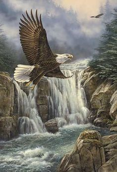 MAJESTIC FLIGHT - BALD EAGLE by Rosemary Millette 2.jpg (JPEG-Grafik, 376 × 550 Pixel)