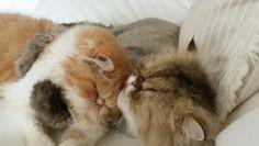 Amor a la hora de la siesta. Tupak y Cupcake de Toofee