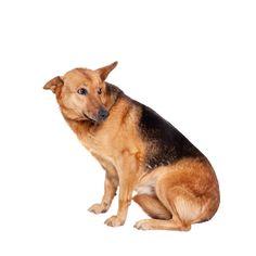 Doggone Safe - Signs of Aggression Service Dog Training, Service Dogs, Dog Training Tips, Rescue Dogs, Pet Dogs, Pets, Doggies, Dog Body Language, Crazy Dog Lady