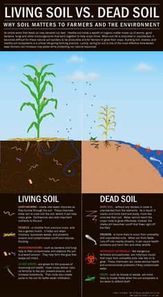 as in the heart so in the earth reversing the desertification of the soul and the soil