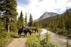 Trekking, Jasper, National Parks, Bucket, Canada, Outdoors, Horses, Culture, Places