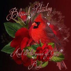 27 Ideas For Tattoo Lion Flower Paintings Pretty Birds, Beautiful Birds, Lion Flower, Image Halloween, Cardinal Birds, Bird Pictures, Cardinal Pictures, Pretty Pictures, Bird Art
