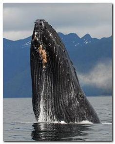 You never know what you will see during an Alaska fly fishing trip.