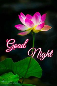 New Good Night Images, Cute Good Morning Images, Beautiful Good Night Images, Good Night I Love You, Good Morning Messages, Good Night Quotes, Good Morning Good Night, Sweet Night, Good Night Sweet Dreams