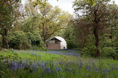 fforest bluebells