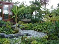 tropical small garden with trees and a pond