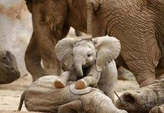 Baby elephants are so cute