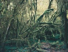 creepy place during the day -- what with all the mossy trees.  i wouldn't want to be there during the night!  kinda unique though during the day.  Hoh Rain Forest, WA  1995