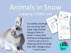 Looking for something exciting for a project based learning unit? This resource focuses on the study of animals in the snow. Teaching Materials, Teaching Resources, Steam Activities, Bear Pictures, Project Based Learning, Creative Thinking, Good Grips, Inventions, Tes