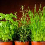 Fresh herbs: Medicine for your metabolism