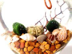 Marimo Terrarium Living pair of japanese moss balls by EclecticZen, $25.00