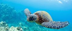 Things To Do In Oahu | Turtle Tours | Turtle Bay Resort