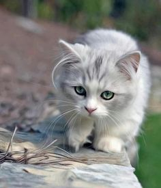 I want this kitty cat.