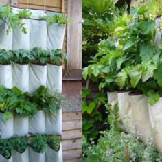 DIY Vertical Herb Garden with a Shoe Organizer Confounded by vegetable digging cats and toiling in the vegetable patch, Instructables member came up with this cool DIY vertical garden solution. In case you don't recognize it, she used an old closet shoe Herb Garden Planter, Herb Planters, Planter Ideas, Gutter Garden, Porch Planter, Garden Trellis, Vertical Garden Design, Vertical Gardens, Vertical Planter
