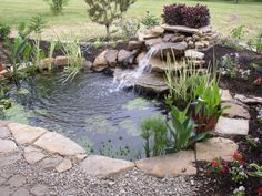 Backyard Ponds: A quick cleaning and maintenance guide to get you ready for the spring season - Written by Marine Biologist Dave Acland on That Fish Blog