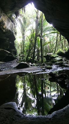 A cave near Punakaiki on the West Coast of New Zealand.