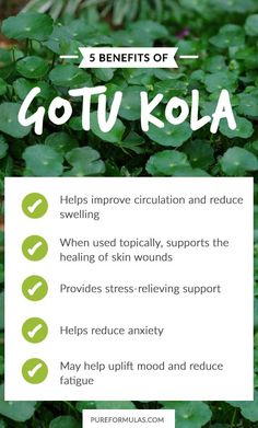 Benefits of Gotu Kola Alternative healing is truly fascinating to me and even more so when it comes to herbs with spectacular names such as gotu kola. Gotu kola is a plant native to Matcha Benefits, Benefits Of Coconut Oil, Health Benefits, Health Tips, Gotu Kola Benefits, Tomato Nutrition, Stomach Ulcers, Types Of Tea, Thing 1