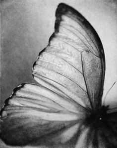butterfly wing - black and white photo