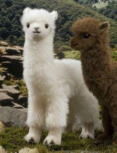 """""""Tansy"""" White Alpaca"""