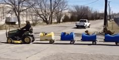 One man made a dog train for all his best friends. | 36 Animal Moments That Changed The World In 2015