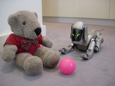 Wally was trying to train his Aibo robot dog to participate in some upcoming photo shoots, but the Aibo wasn't interested, and focused on his pink ball instead.