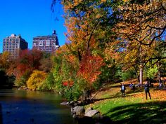 A walk through Central Park in the fall with a Pumpkin Latte in hand. Mmmm...