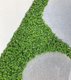 Dichondra Repens ground cover to front and rear gardens Outdoor Plants, Outdoor Gardens, Hampton Garden, Ground Cover Plants, Garden Landscape Design, Front Yard Landscaping, Shade Garden, Garden Inspiration, Planting Flowers