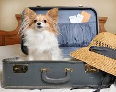 Image result for dog in suitcase