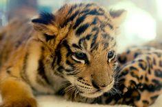 ''Existe apenas uma coisa que excita os animais mais do que o prazer, é a dor.''